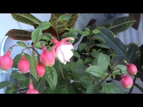 домашние цветы фото как за ними ухаживать