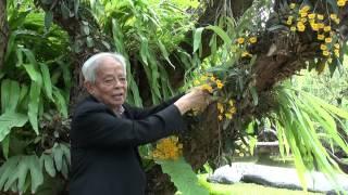 ศาสตราจารย์ระพี สาคริก : ตอนที่ 24 (6.) การพึ่งพาระหว่างกันของพรรณไม้ (Dendrobium lindleyi)