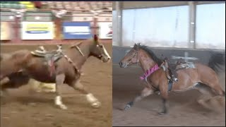 DO MY HORSES BARREL RACE WITHOUT A RIDER?!?!?!