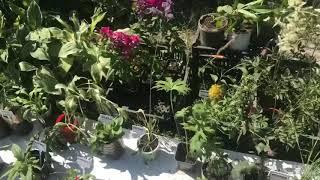 Продажа цветов на Флоре 2018.