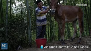 Horse caravan gallops into China's poverty-relief mission
