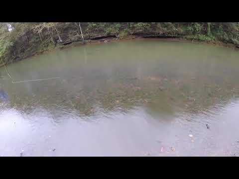 Fly Fishing the Elk River in Tennessee