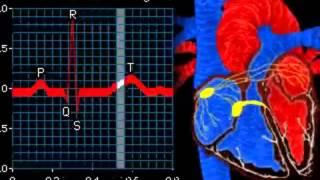 Работа сердца электрокардиограмма(Created using http://studio.stupeflix.com/, 2015-10-18T17:27:25.000Z)