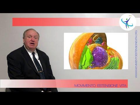Le cellule umane: le componenti importanti per l'invecchiamento e dove si puo' agire per l'antiage