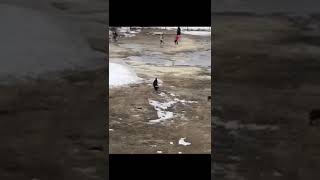 Свора собак на территории школы в Якутске