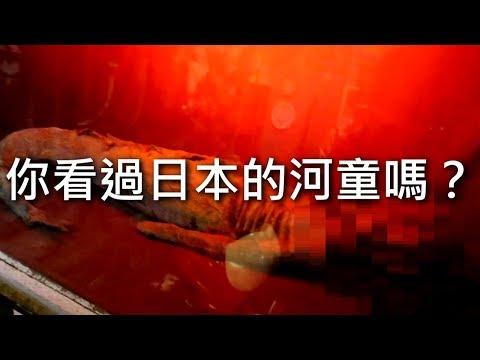[chu樂] 你看過日本的河童嗎?【搜奇博物館】新北淡水景點