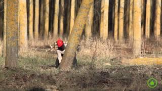 Garnica Poplar Plywood