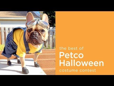the best of petco 25000 halloween pet costume photo contest 2013 make a scene - Pet Halloween Photo Contest
