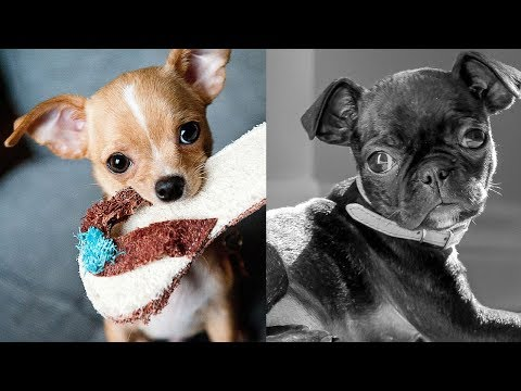 Top 5 Types of Small Dogs [Part 1]