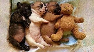 Cute is Not Enough - Funny Cats and Dogs Compilation #54