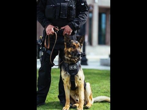Suffolk County Sheriffs Department K9 Unit