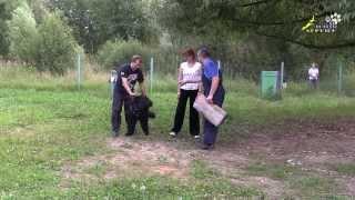 Дрессировка чёрных терьеров ЗКС 5, активация собаки через защиту хозяина