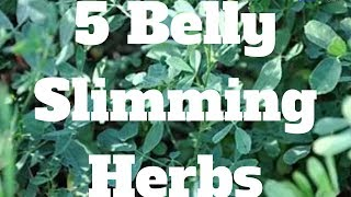5 Belly Slimming Herbs