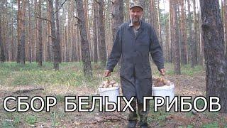 Сбор грибов.Поход в лес за грибами.Много грибов.Секреты сбора грибов.Как найти грибы в лесу