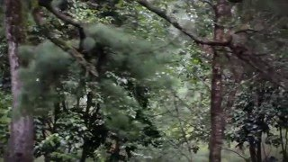 Shillong Cherrapunji Mawlynnong- Summer 2013