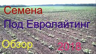 Семена под Евролайтинг. Обзор 2018 год