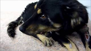Howl Of A Dog - Homeless dog transformation. A happy ending story that will warm your heart.