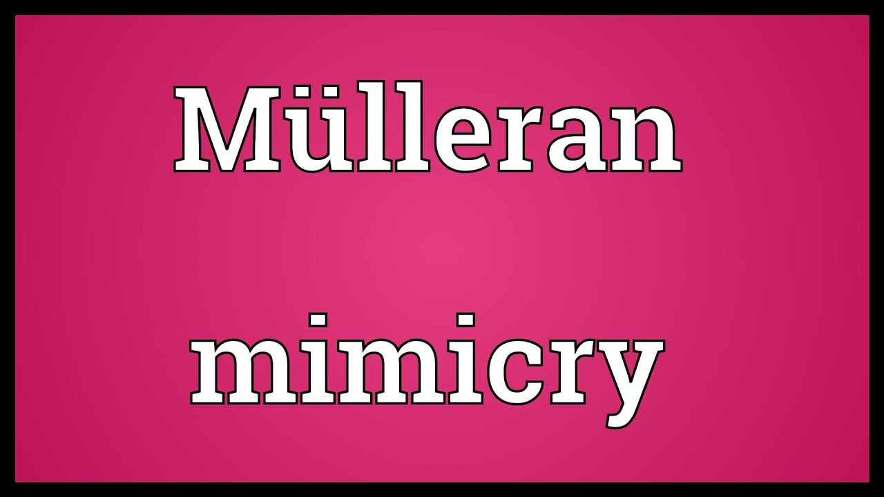 What is Mimicry Word Meaning 46