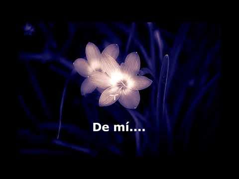 Flor da noite_Nana Caymmi (TRADUCIDA AL ESPAÑOL)