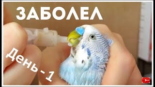 Как лечить попугая || День - 1 || Как я кормила попугая со шприца || Советы по лечению попугая