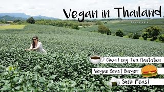 Vegan in Thailand - Sushi, burgers, brownies and a tea plantation!