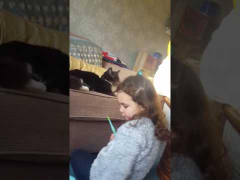 Cat attack ! 2017