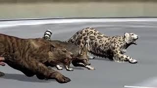 Animals rase