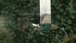 At The Feeder The Birds Come And Go, Chirping Of Michelangelo