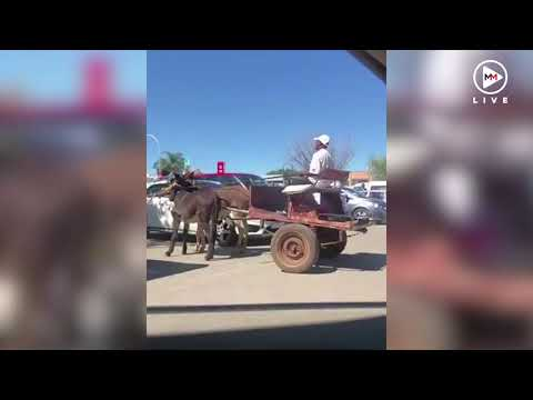 South Africans get a big kick out of reversing donkey cart