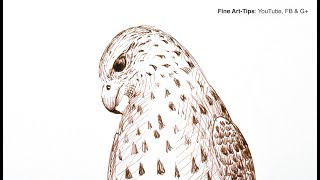 How to Draw a Falcon With Pen & Ink (Fountain Pen) - Narrated