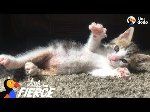 Tiny Kitten Found Barely Breathing Becomes The Ultimate Fighter - ROCKY | The Dodo Little But Fierce