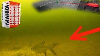 Реакция Рыбы на МАНКУ подводная съемка Плотва, Окунь, Подлещик. Зимняя рыбалка на мормышку 2018.