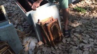 process of extracting honey in Vietnam