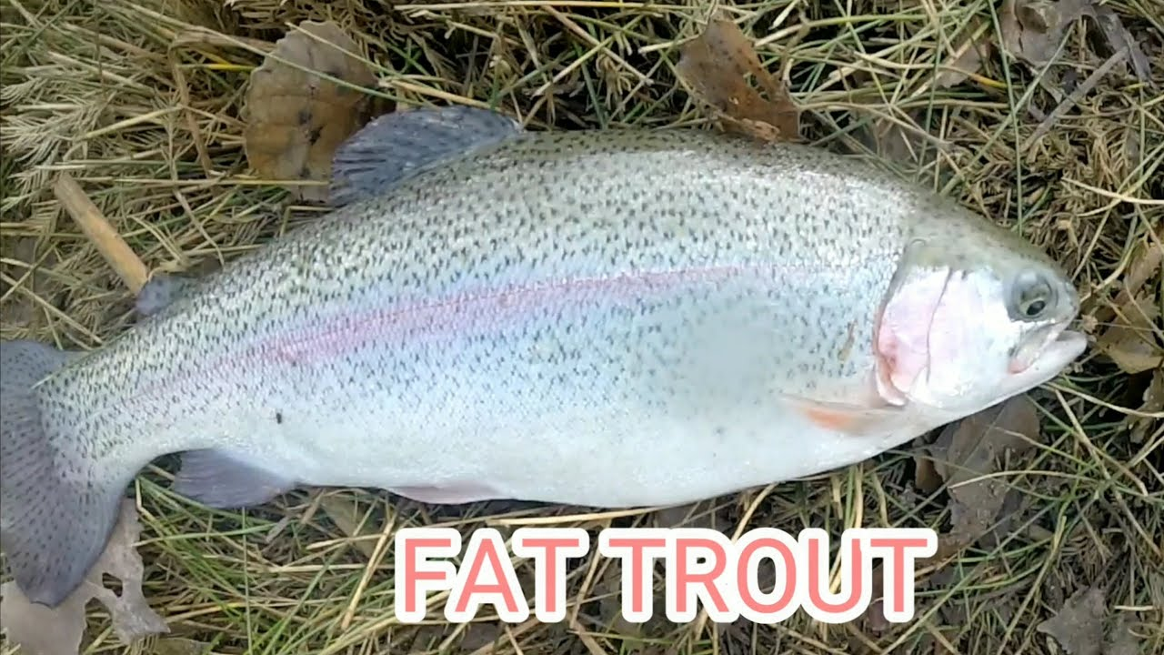 Epic trout Fishing at Fin and Feather