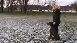 Grynia Black sagitta (Mucina) trénink poslušnosti