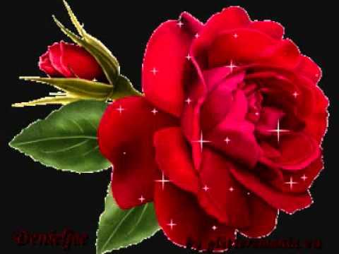 Una Rosa Rossawmv Youtube