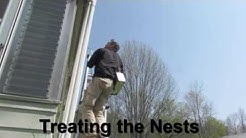 Treating a Carpenter Bee Nest Oxford, Ma. USA | Bug Bully Pest Control Grafton, Ma.