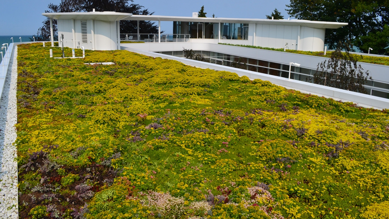 Perfect Green Roof Solutions   Company Of The Week