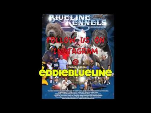 BLUELINE INSTAGRAM FOLLOW  {eddieblueline}