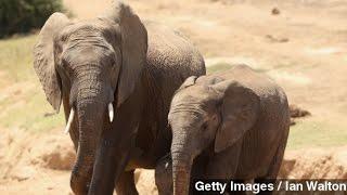 Earth Has Lost Half Its Vertebrate Wildlife Since 1970: WWF