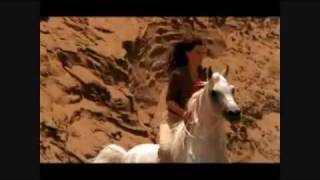 The Roses of the Desert- Beautiful Arabian Horses-STING-DESERT ROSE