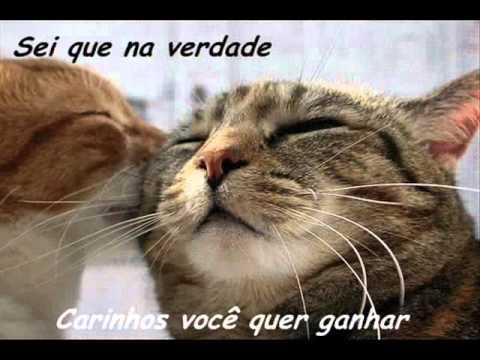 musica gatinha manhosa adriana calcanhoto mp3 gratis
