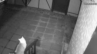 Съемка IP-камерой на чипе HI3518E в ночное время (NightShot)(Для блога http://blog.kvv213.com Ночная съемка на IP-камеру видеонаблюдения с медиапортом 34567 и на чипе 34567. Работает..., 2015-06-03T06:19:22.000Z)
