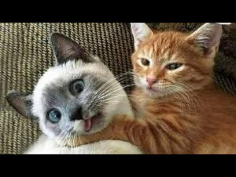 funny pet animals reactions 😂 funny dogs🐶 funny cats reaction #cutefunnypet #petanimals #animals