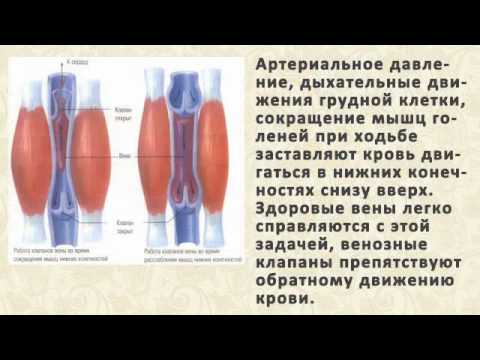 Аскорутин от варикоза отзывы