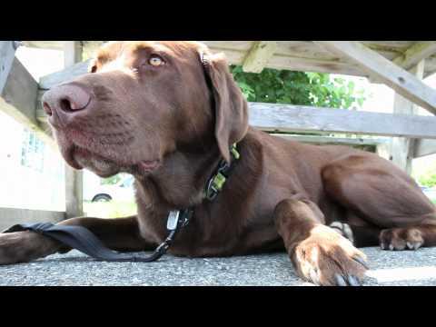 ibex-outdoor-clothing-&-zukes-dog-treats-contest