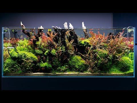 forest-aquascape---4k-cinematic-by-green-aqua