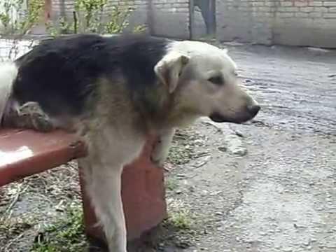 собака удобно сидит на лавке