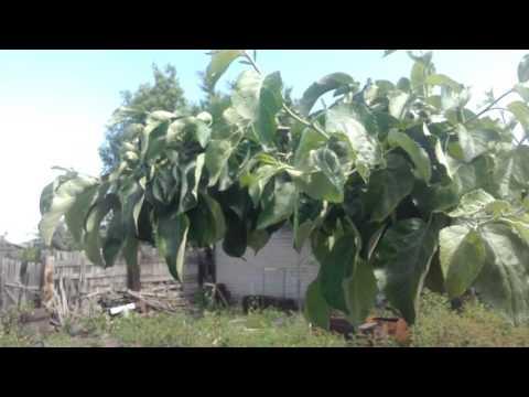 Дача 4 сотки будущий сад часть 1 Самарская область - город Сызрань