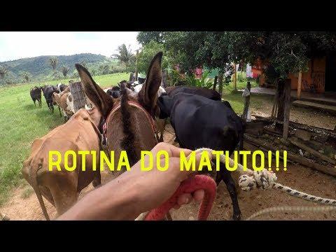 UM DIA DE LEITEIRO||ROTINA DO MATUTO *ADB*